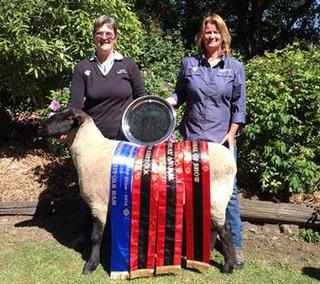 Great Achievement for our Suffolk Stud, Won overall Champion Animal of Canterbury A&P Show. With Penni and Rocci.