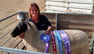 Supreme sheep of show, Amuri A&P Show 2015