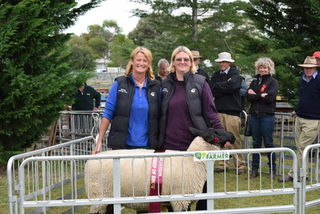 Supreme champion sheep of show , Hawarden A&P show 2018