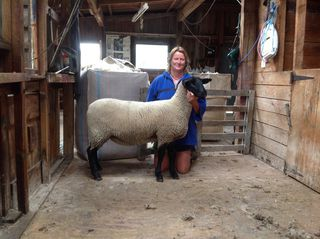 Tawhai 3/13 First placed suffolk ewe hogget. Suffolk feature show 2014
