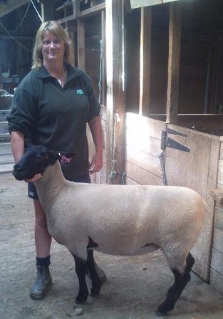 Rocci and 36 / 12 after chch show where she got 2nd in suffolk ewe hogget class