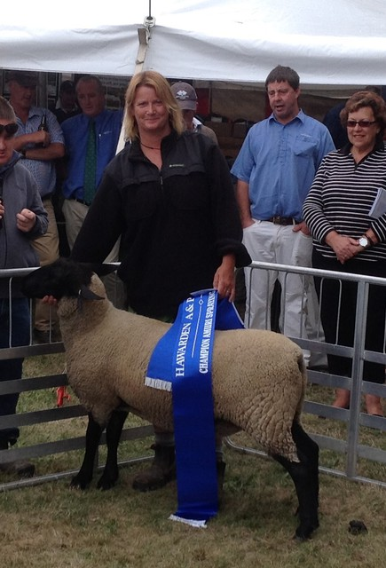 Tawhai 3/13 Champion meat breed ewe lamb Hawarden Show 2014