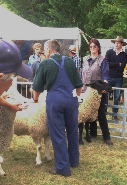 Interbreed Meat breed class, Penni with supreme suffolk, Hawarden A&P Show 2014