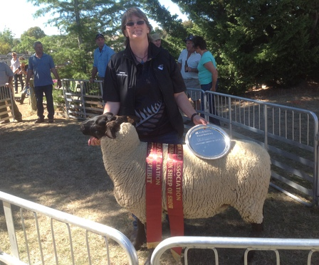 Supreme sheep of show, Hawarden A&P Show 2015 - Tawhai